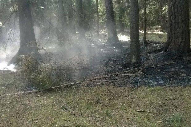 Podpalacz grasuje w lesie – pomóż go zatrzymać!