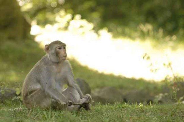 Nasze Zoo zaprasza w Boże Ciało