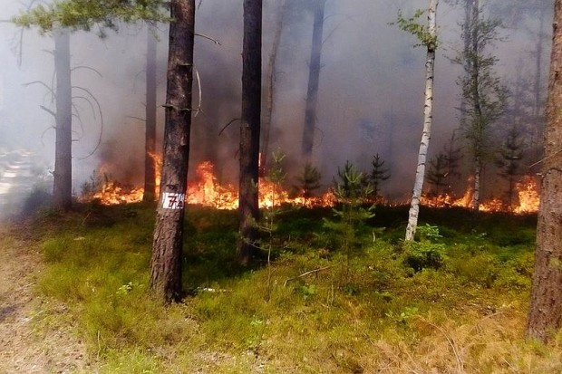 Pożar lasu koło Ławszowej
