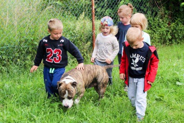 Amstaff w przedszkolu – zajęcia w Łaziskach