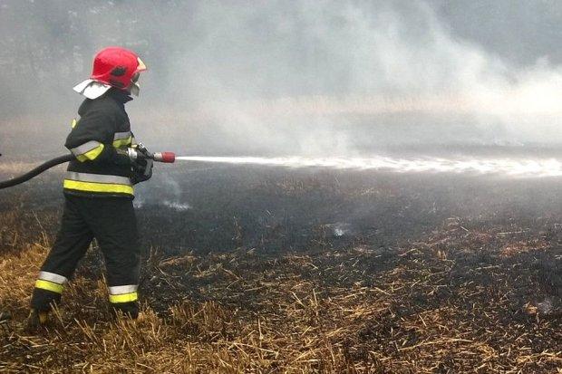 Trzy hektary zboża spłonęły w Iwinach