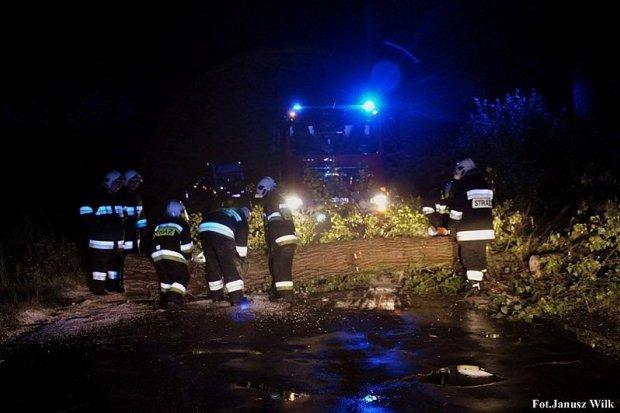 Pożar lasu i wichura w powiecie zgorzeleckim