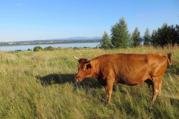 Spasanie łąk to ochrona przyrody!