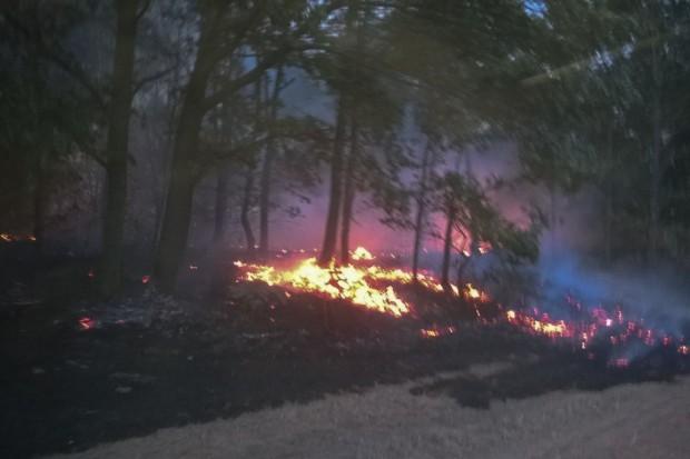 Pożar lasu w Warcie i Iwinach