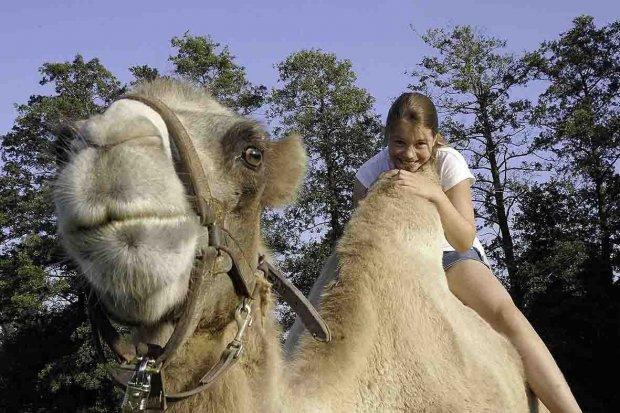 Mnóstwo zabawy, radości oraz przygód ze zwierzętami! Festyn w Naszym Zoo