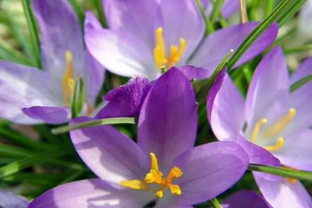 By na wiosnę było pięknie i kolorowo… Ok. 80 tys. nowych sadzonek na trawnikach i klombach