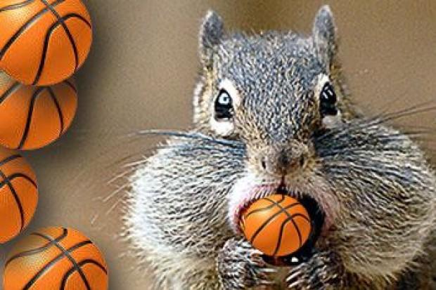 Sport i zabawa z koszykarskim klubem GBC Squirrels w Naszym Zoo