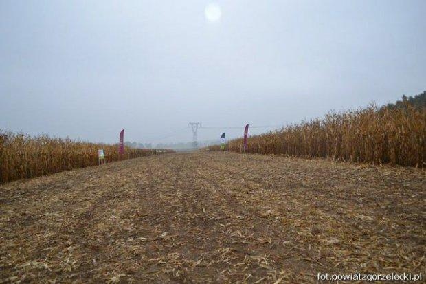 Dni Kukurydzy w Sulikowie