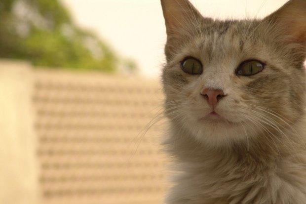 Zostań społecznym opiekunem kotów!