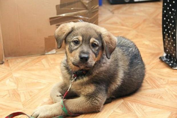 Wielkie serca urzędników – pies znalazł dom