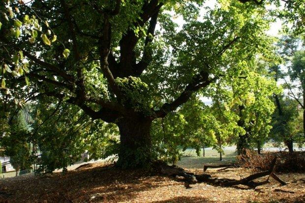Gmina chroni pomniki przyrody