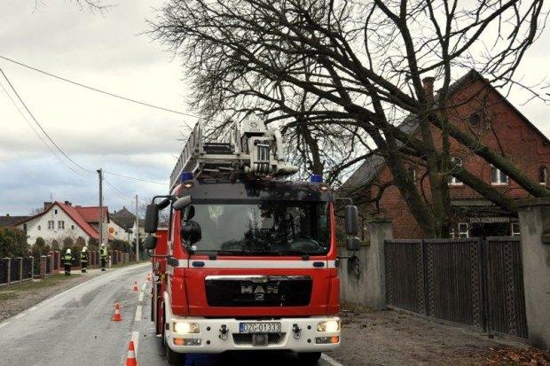 Silny wiatr powalił drzewo. Strażacy z OSP Ruszów interweniowali