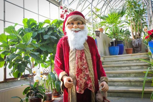 Świąteczny nastrój w palmiarni