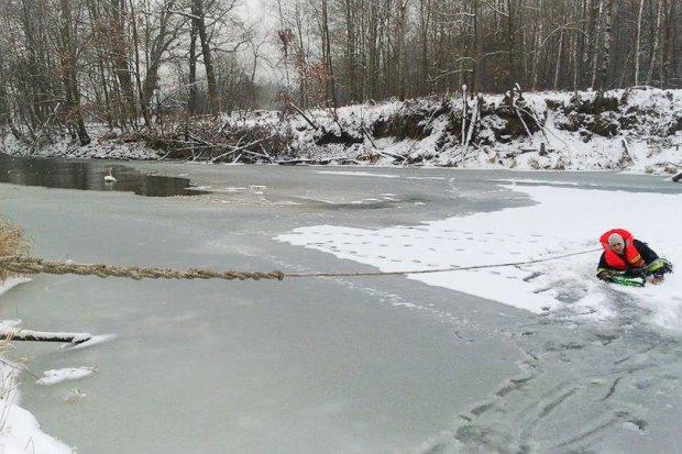 Uratowali łabędzia przymarzniętego do tafli lodu