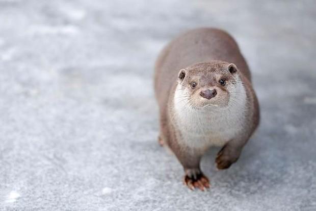 Zimą w Naszym Zoo na rozgrzewkę...