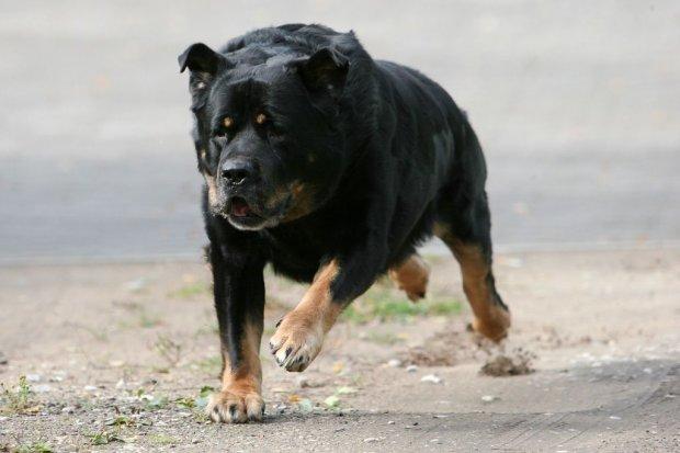 Ponad 160 przypadków pogryzień przez psa w ciągu roku