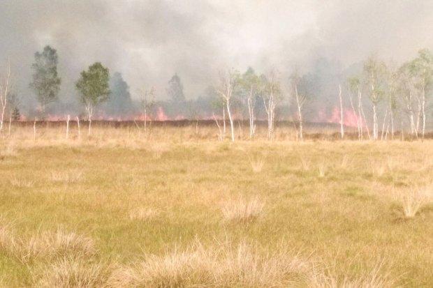 Pożar na poligonie, spłonęło ok. 50 ha