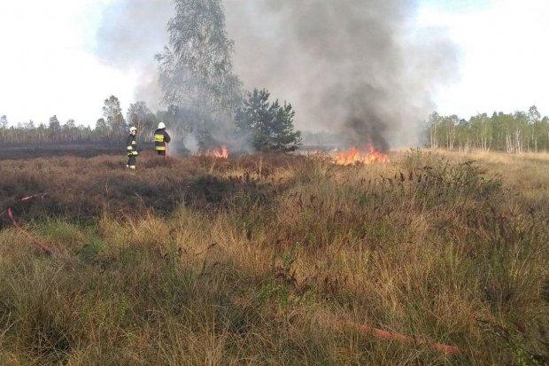 Ponad 40 zastępów straży pożarnej gasiło pożar na poligonie w Świętoszowie