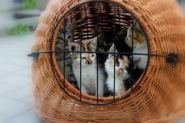 Podrzucił 10 małych kotków pod drzwi obcego domu