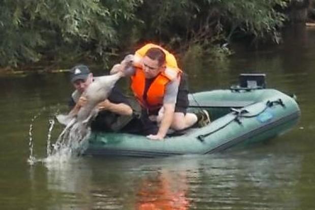 Strażacy uratowali łabędzia