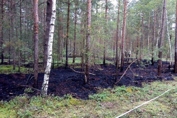 Pożar lasu w okolicach Ławszowej