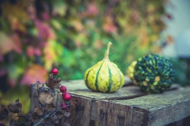 Zadbaj o swój zdrowy wiosenny ogród już tej jesieni