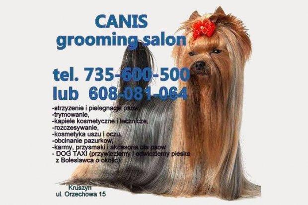 Zadbaj o swojego pieska w CANIS grooming salon