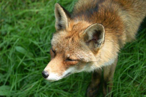 Ponad 50 km linii kolejowych i ponad 15 tys. śladów obecności dzikich zwierząt
