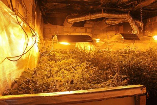 Warta ok. 600 tys. zł plantacja marihuany zlikwidowana. Zatrzymanym grozi do 10 lat więzienia
