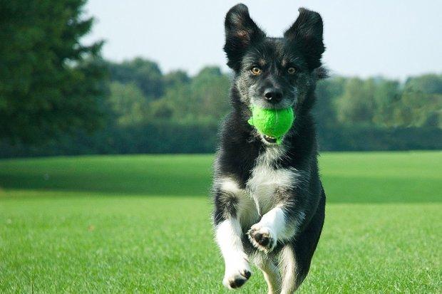 W Bolesławcu pojawią się pisuary dla psów?