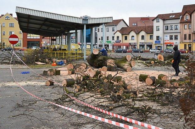 Wycięli drzewa na dworcu PKS. Budowa galerii ruszy z kopyta?