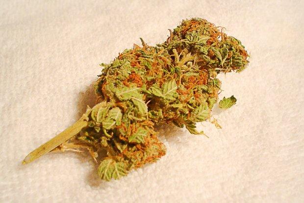 Miał przy sobie 130 porcji marihuany. Wpadł, bo puściły mu nerwy