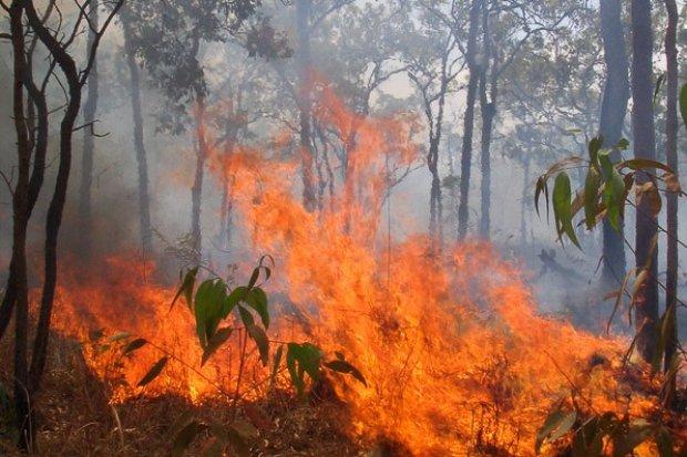 10 tys. zł za pomoc w złapaniu podpalacza lasu