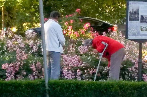 Chamsko kradną miejskie kwiaty. Grozi za to 500-zł mandat!