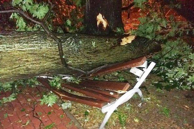 Powalone przez wichurę drzewa uszkodziły plac zabaw w Parku Miejskim