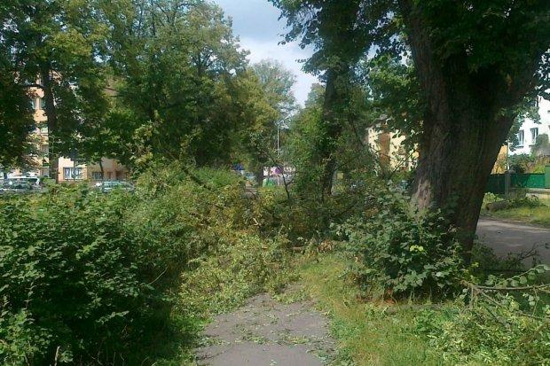 Niekoszona trawa, konary i gałęzie przy Alei Wojska Polskiego