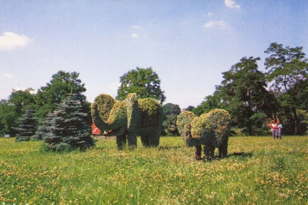 Pamiętacie te słonie? A czy wiecie skąd się u nas wzięły?