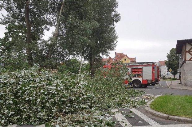 Łokietka: drzewo spadło na drogę