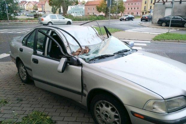 Drzewo spadło na auto, na Łokietka, kobieta i dziecko ranni