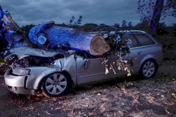 Koło Kraszowic drzewo runęło na auto – kierowca ranny