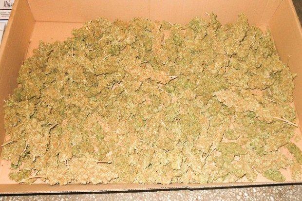 28-latek wpadł z ogromną ilością marihuany i nielegalnego tytoniu