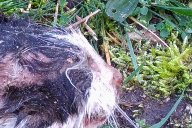 Znaleźli oderwaną lub odciętą głowę kota przy Wańkowicza