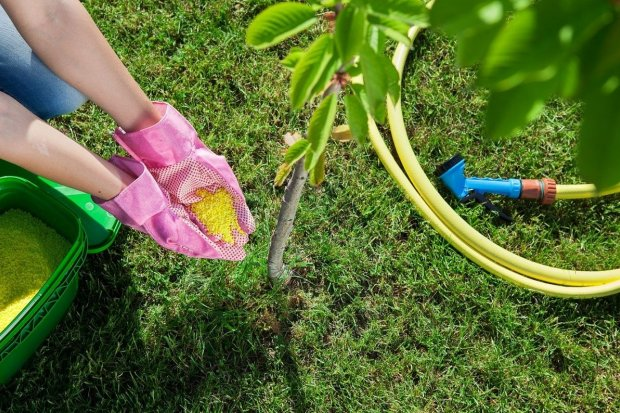 Nawożenie drzewek owocowych