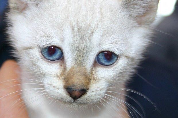 Pijany 61-latek wyrzucił z balkonu 4-miesięcznego kotka. Bo ten… stłukł wazon