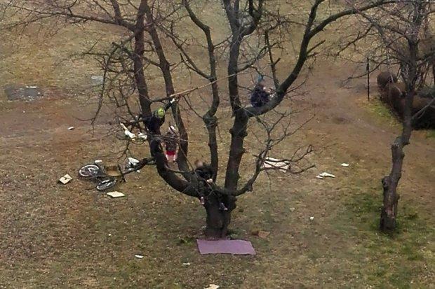 Gdzie są rodzice, kiedy ich dzieci wchodzą na kilkumetrowe drzewo?