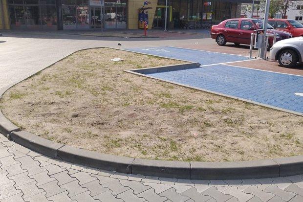 Niszczą nowe trawniki przy galerii na Wesołej