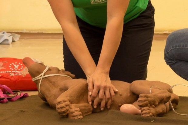 """Uczniowie """"Handlówki"""" wiedzą, jak udzielać pierwszej pomocy… psom i kotom"""