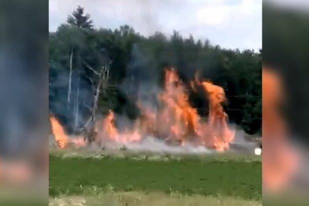 Ściana ognia nieopodal torów. Pożar w Wilczym Lesie