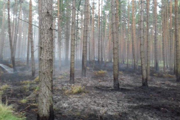 Kolejny pożar lasu