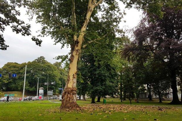 Co się stało z tym drzewem?